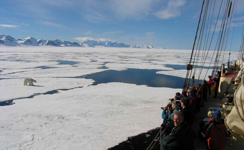 noorderlicht watching polar bear from deck oc