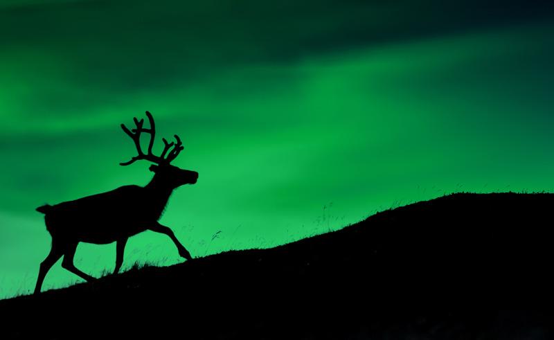 Northern Lights And Reindeer Sledding Tromso Lyngsfjord