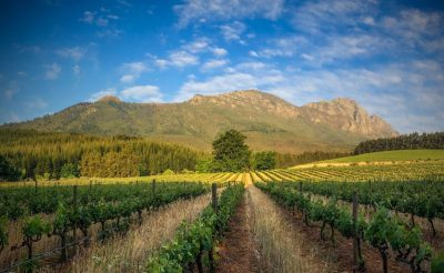 south africa winelands scenery