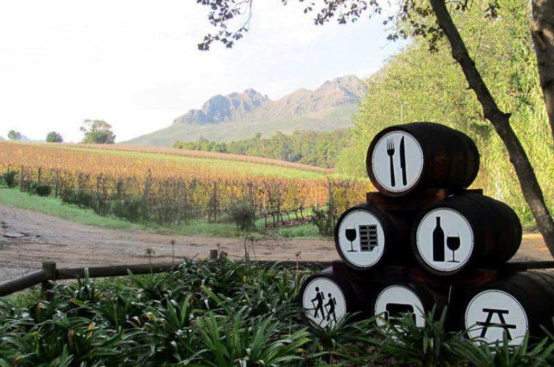 south africa winelands vine hopper tour2