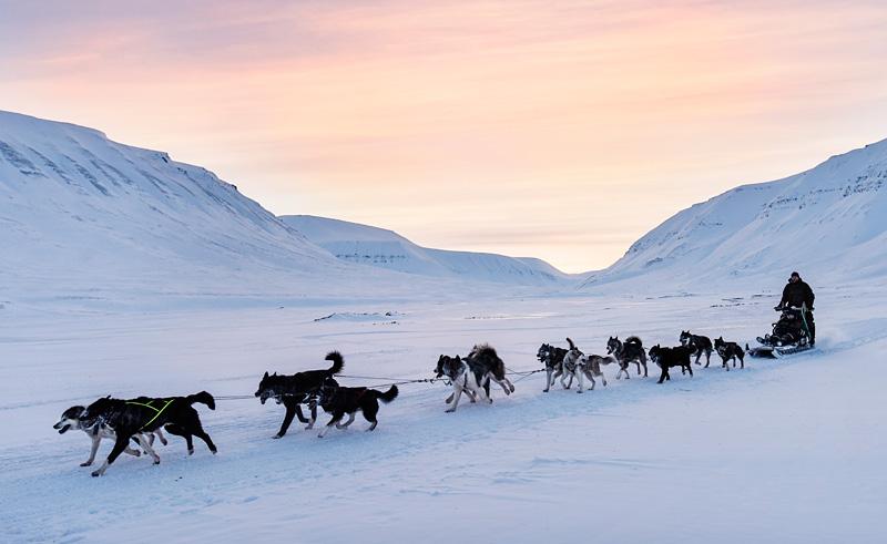 svalbard husky sledding bolterdalen htgrtn
