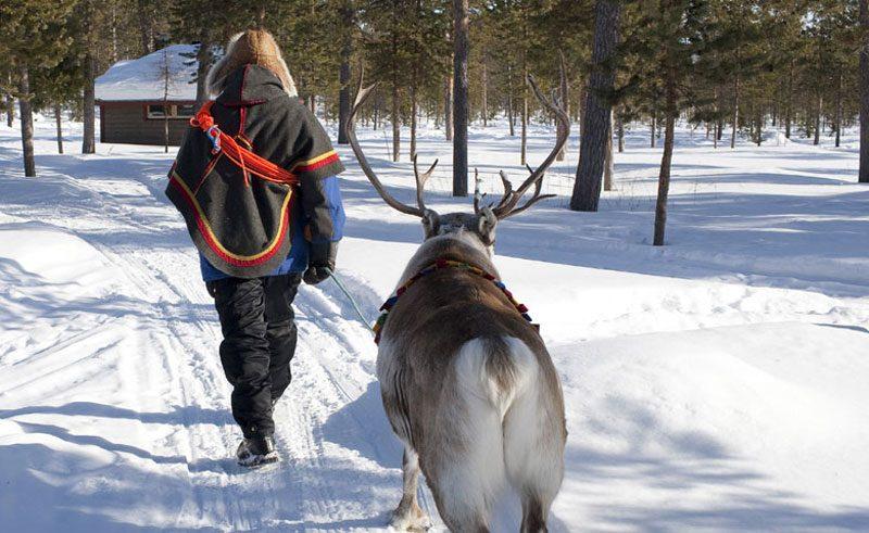 sweden lapland icehotel reindeer and sami