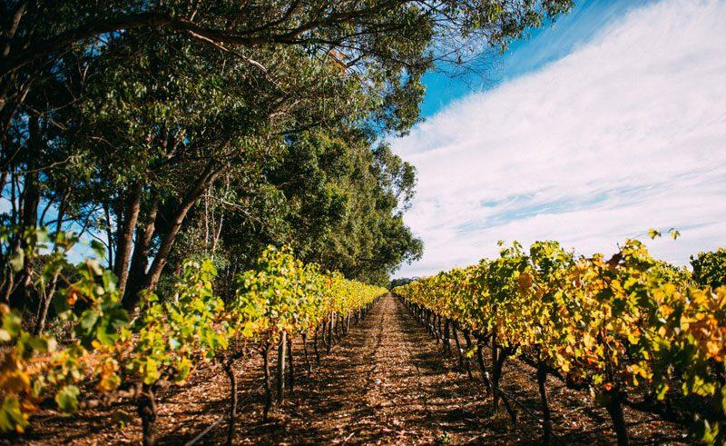 wa margaret river vineyard