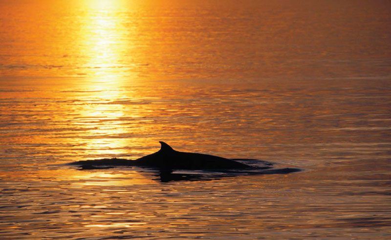 whale watching sunset
