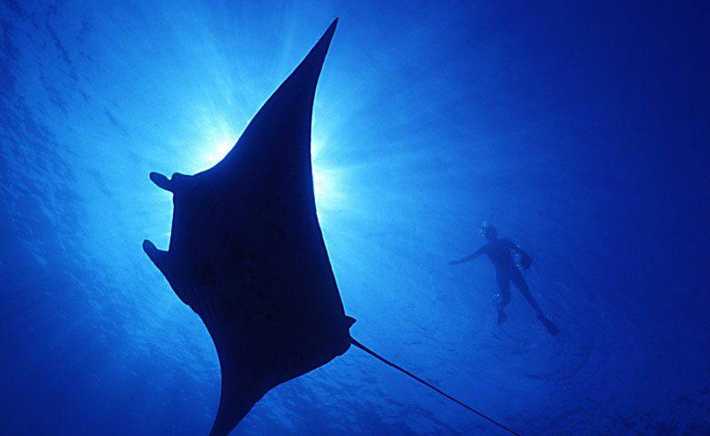 manta ray dive queensland