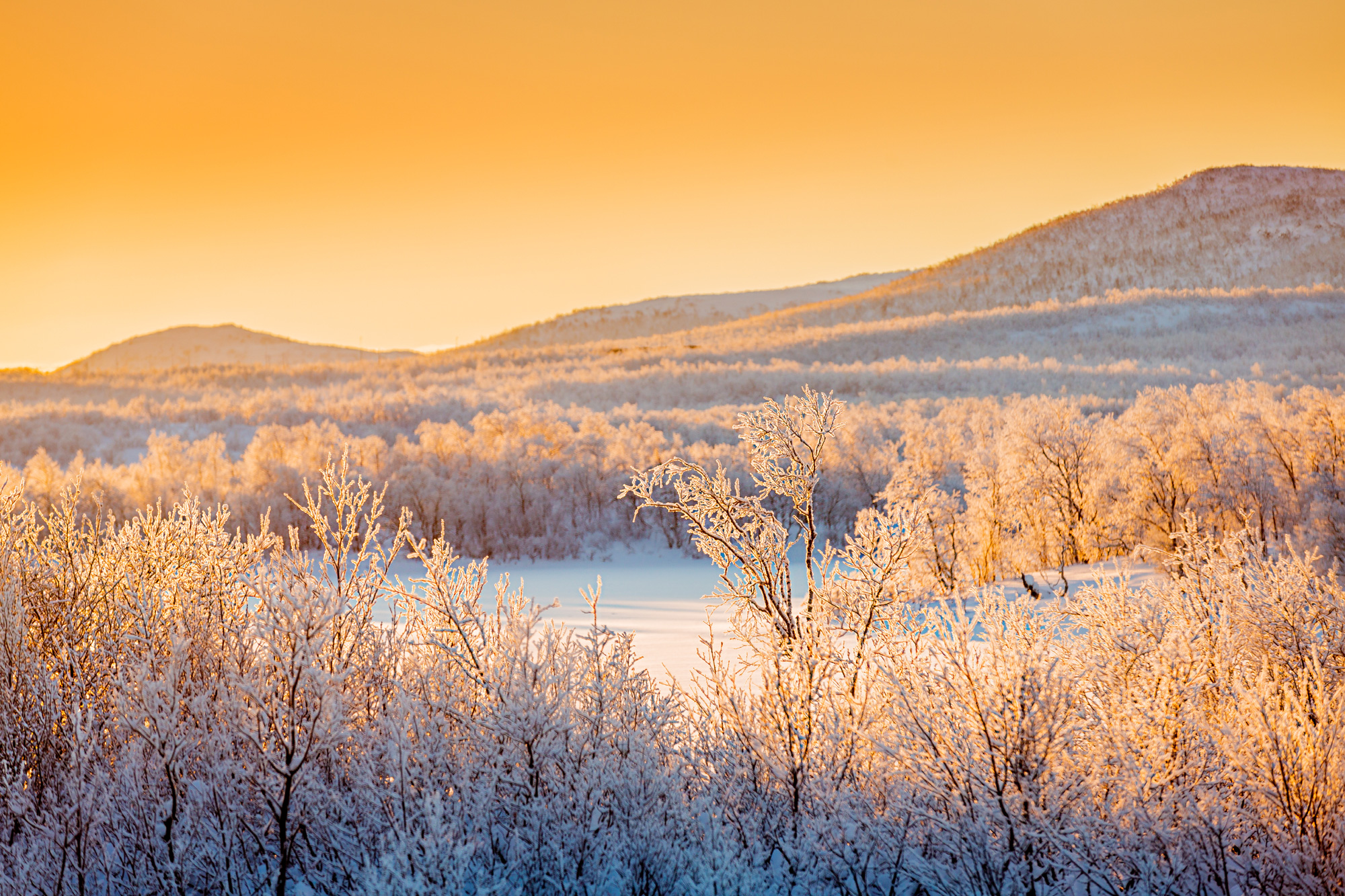 swedish lapland winter sunlight over forest rth