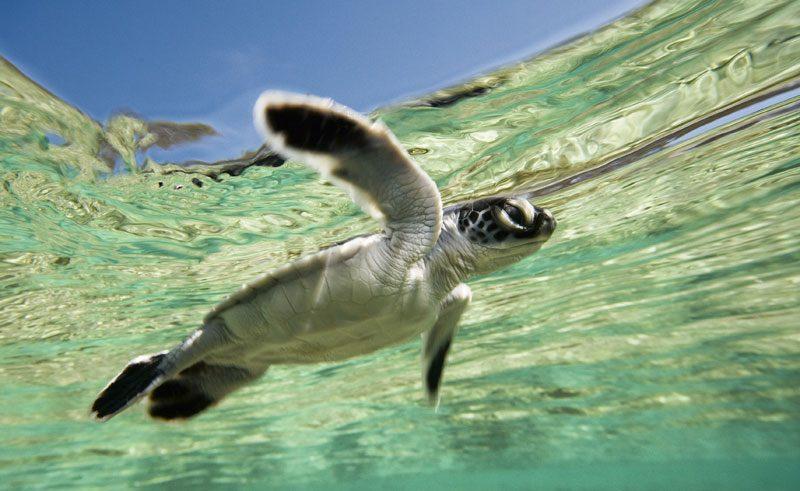 turtle queensland