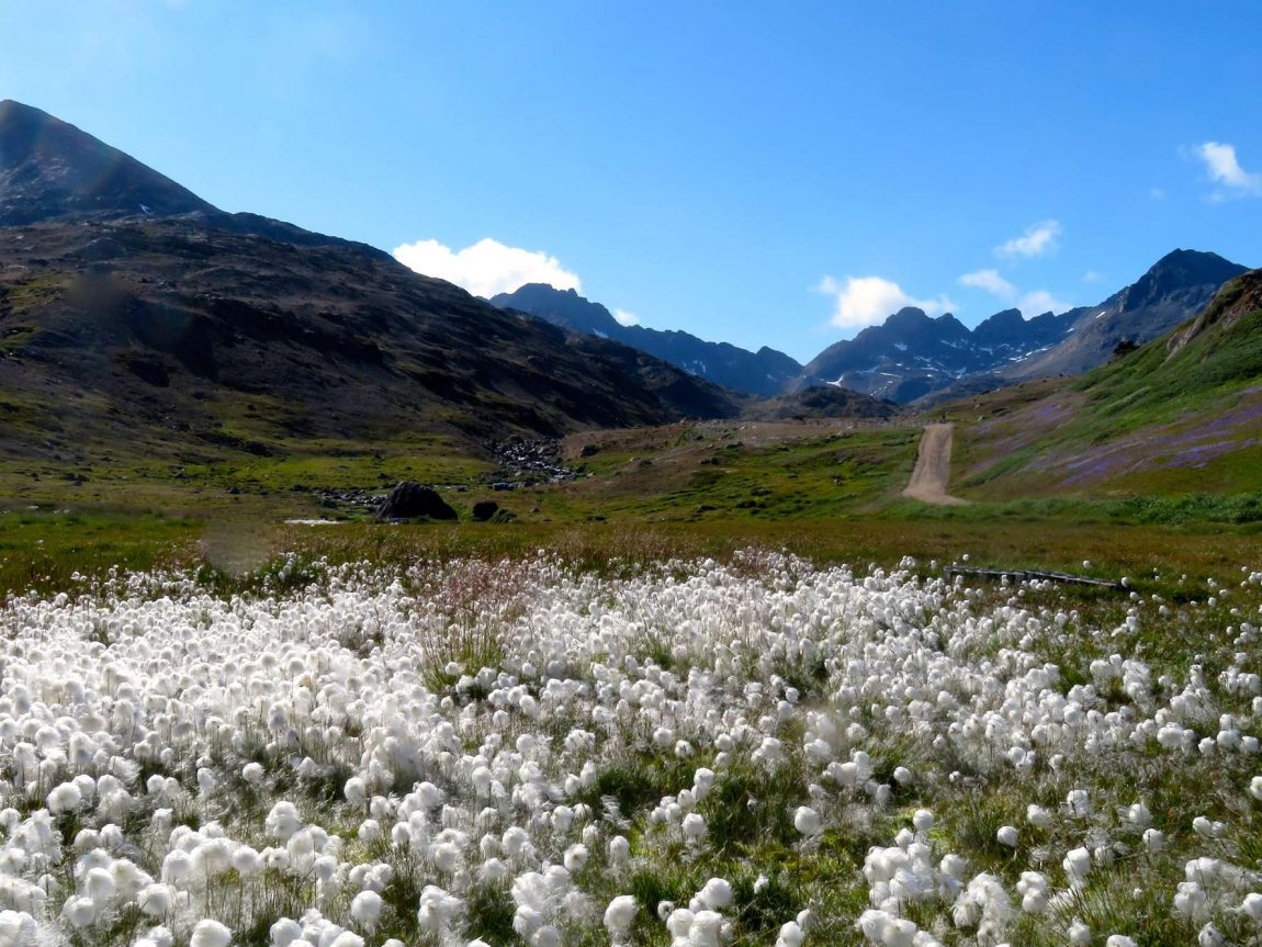 east greenland tasiilaq valley of the flowers view ch