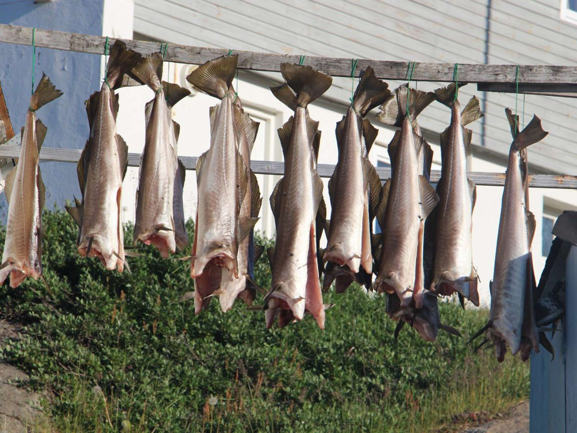 greenland east fish drying client blog