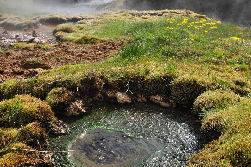 iceland hveragerdi hot spring