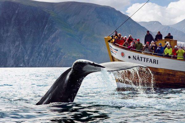 iceland north east humpback fluke ns