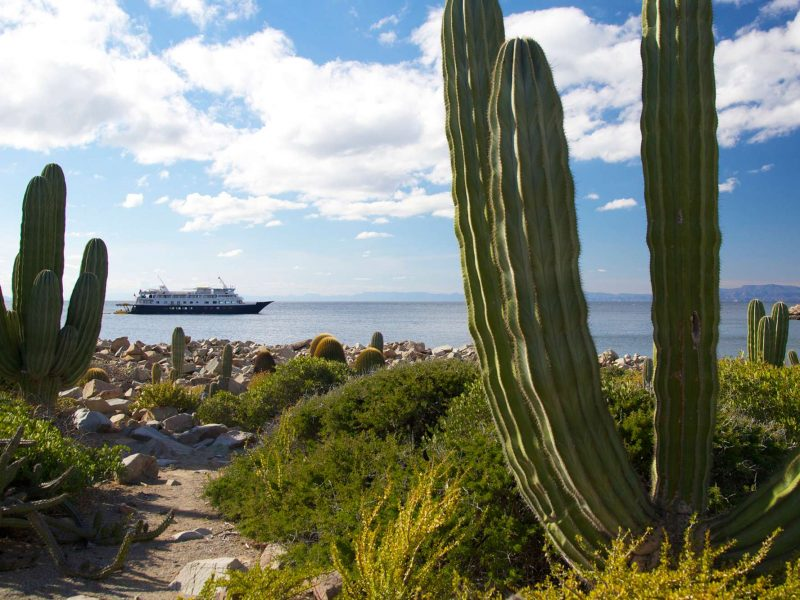 baja california ship safari endeavour and cacti uncr