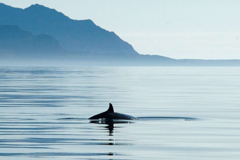 svalbard whale boat safari basecamp ki