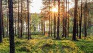 swedish lapland loggers lodge pine tree forest walk