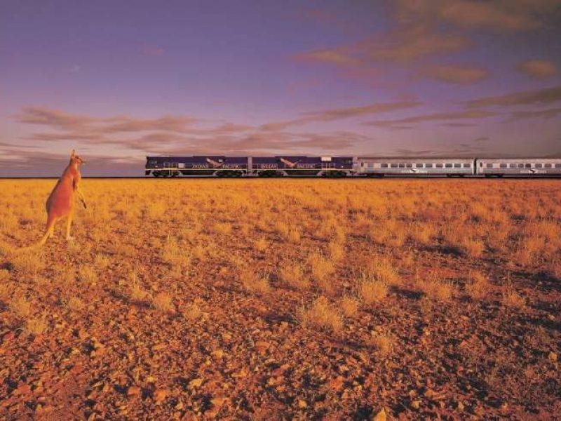 australia kangaroo indian pacific train gsr