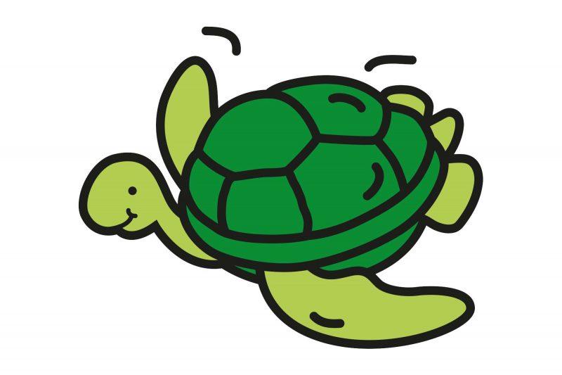 edu-responsible-travel-turtle