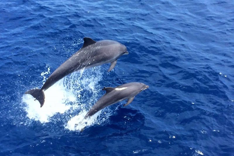edu mallorca dolphin watching