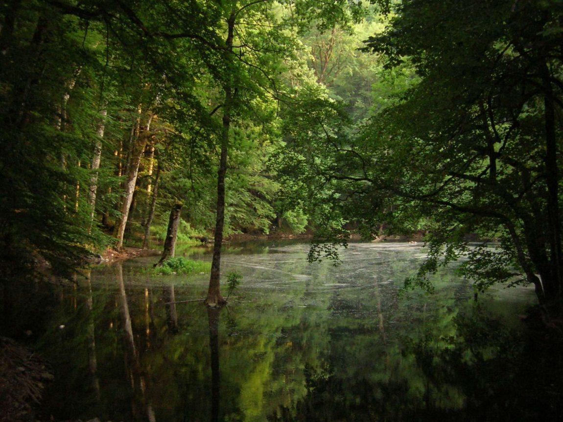 edu montenegro biograd lake trees in water