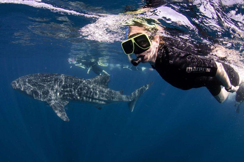Swimming with whale sharks, NIngaloo, Western Australia