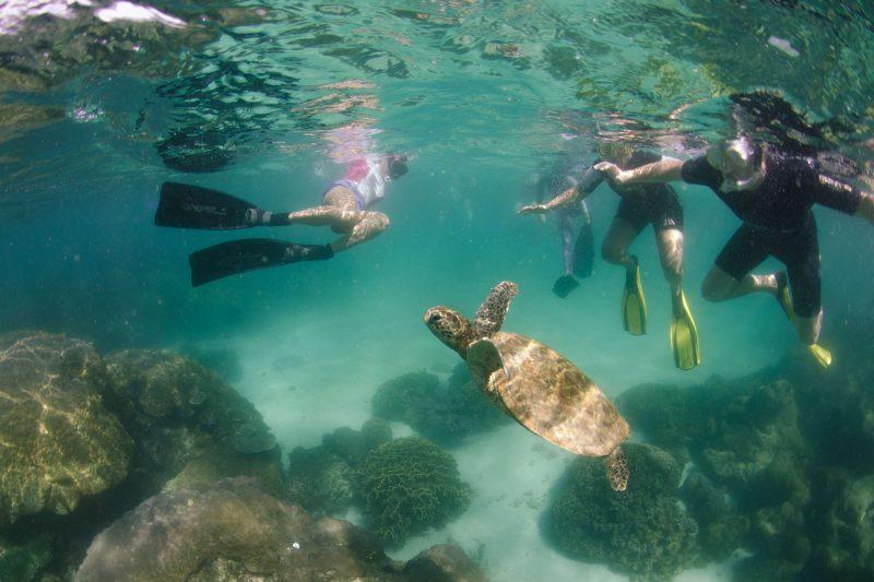 western australia ningaloo snorkelling with turtle ll