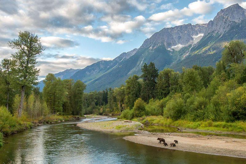 canada bear watching from tweedsmuir park lodge british columbia ab