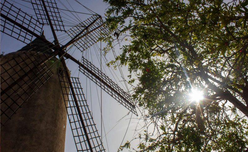edu mallorca es pla wind mill