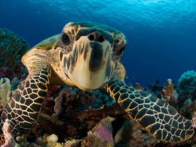 edu responsible travel costa rica turtle