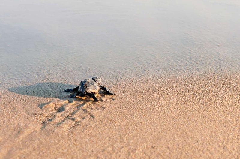 edu responsible travel turtle beach