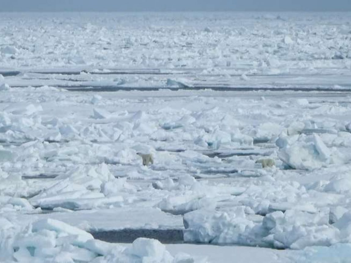 spitsbergen spotting polar bear mother and cub on ice cp