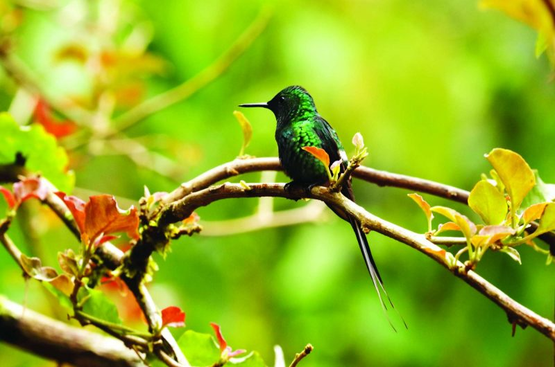 edu costa rica hummingbird