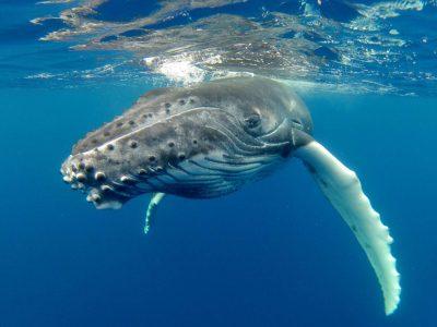 edu responsible travel whale