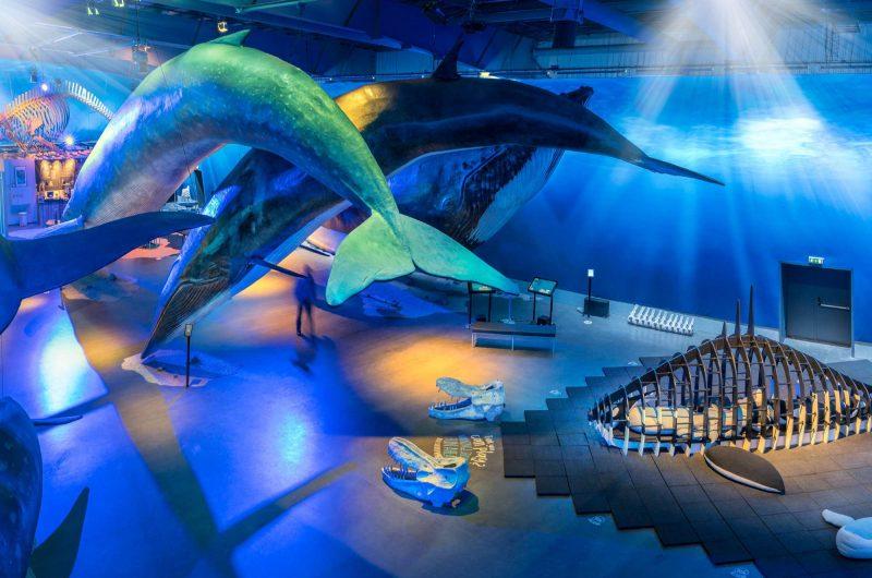 edu whales of iceland