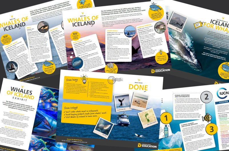 edu whales of iceland resource