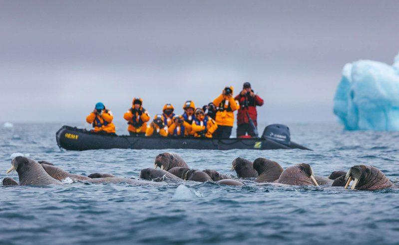 Watching walrus from a Zodiac