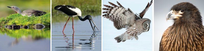 Birdwatching blog strip2