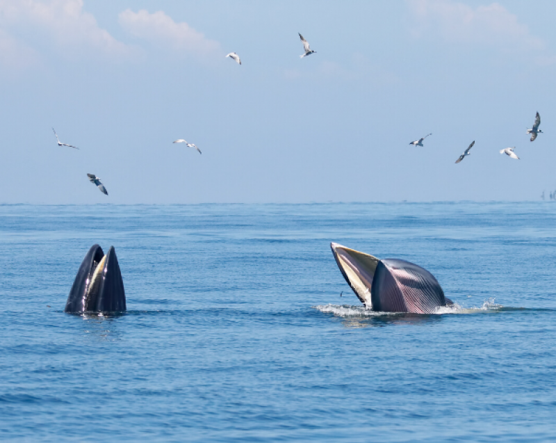 brydeswhale newzealand