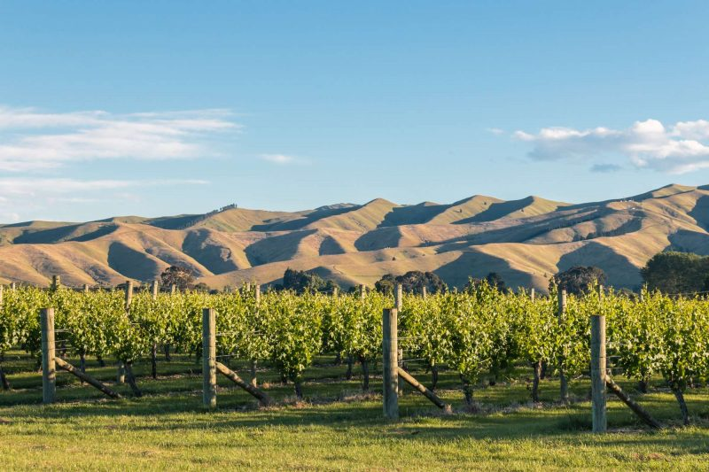 new zealand marlborough vineyard istk
