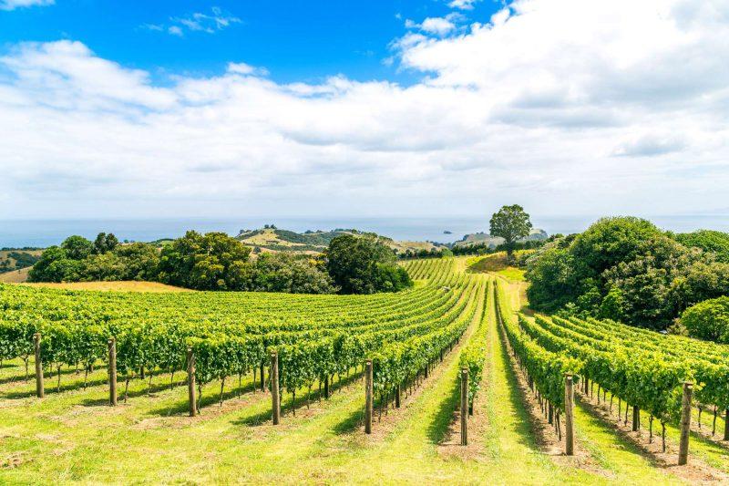 new zealand waiheke island vineyard istk