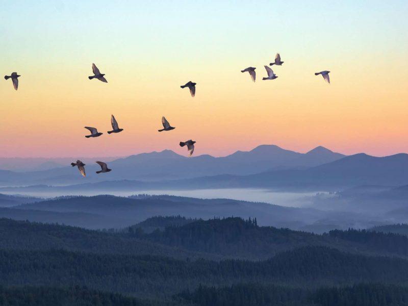 flock of birds at sunrise istk