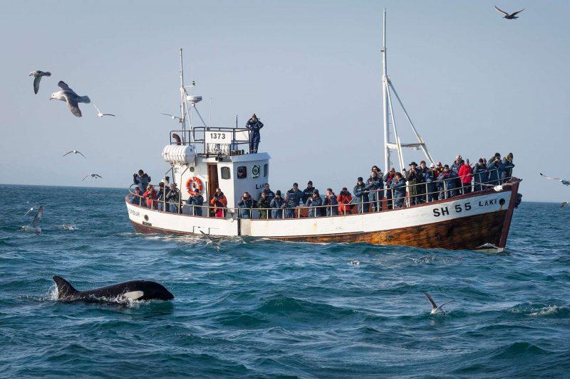 iceland grundarfjordur orca watching boat rth