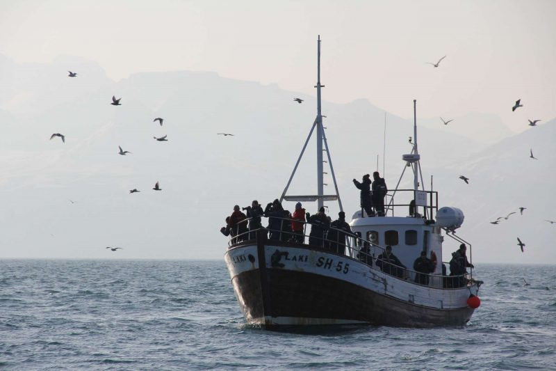 iceland snaefellsnes whale watching boat grundarfjordur cs