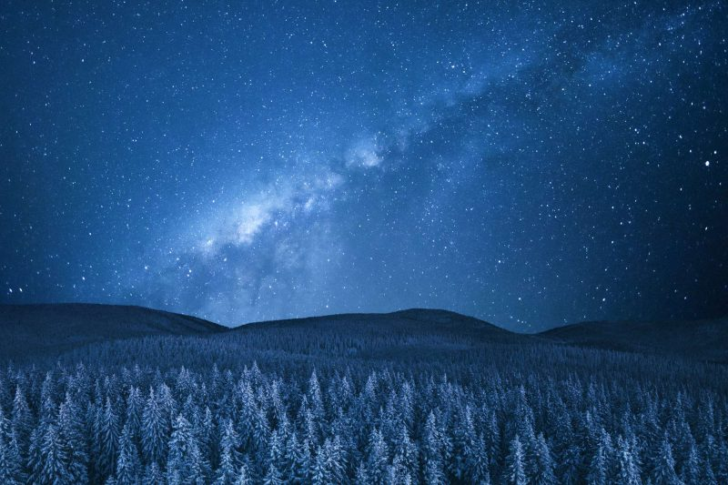 starry sky over fir trees istk