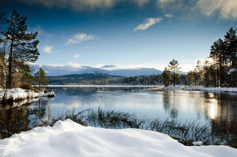 winter wildlife loch view
