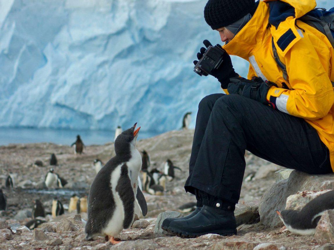 antarctic peninsula inquisitive gentoo penguin chick inspecting tourist istk