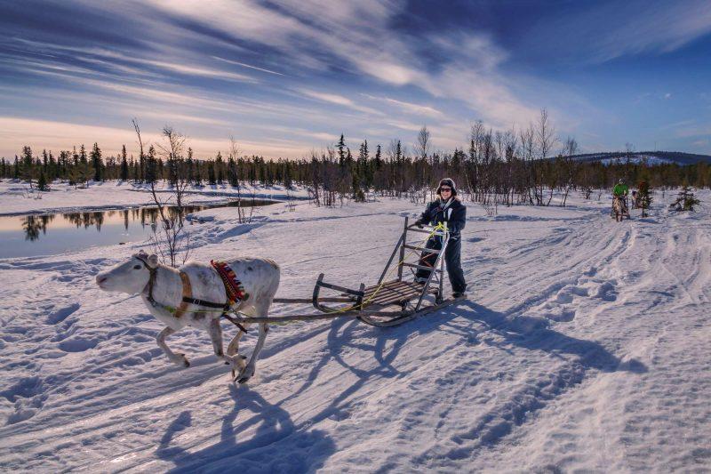 lapland reindeer sledding rth