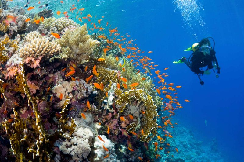 fiji yasawa islands diving among coral reef yir