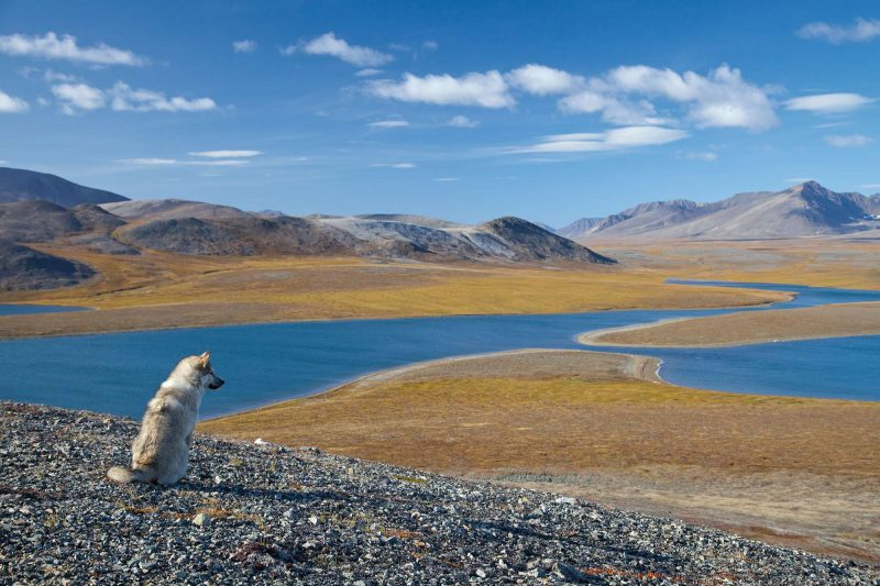 eastern russia husky overlooking picturesque valley chukotka astk