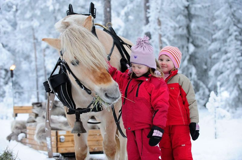 norway trysil horse sleigh ride skiscan